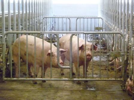 varkenshokken installateur stalinrichting